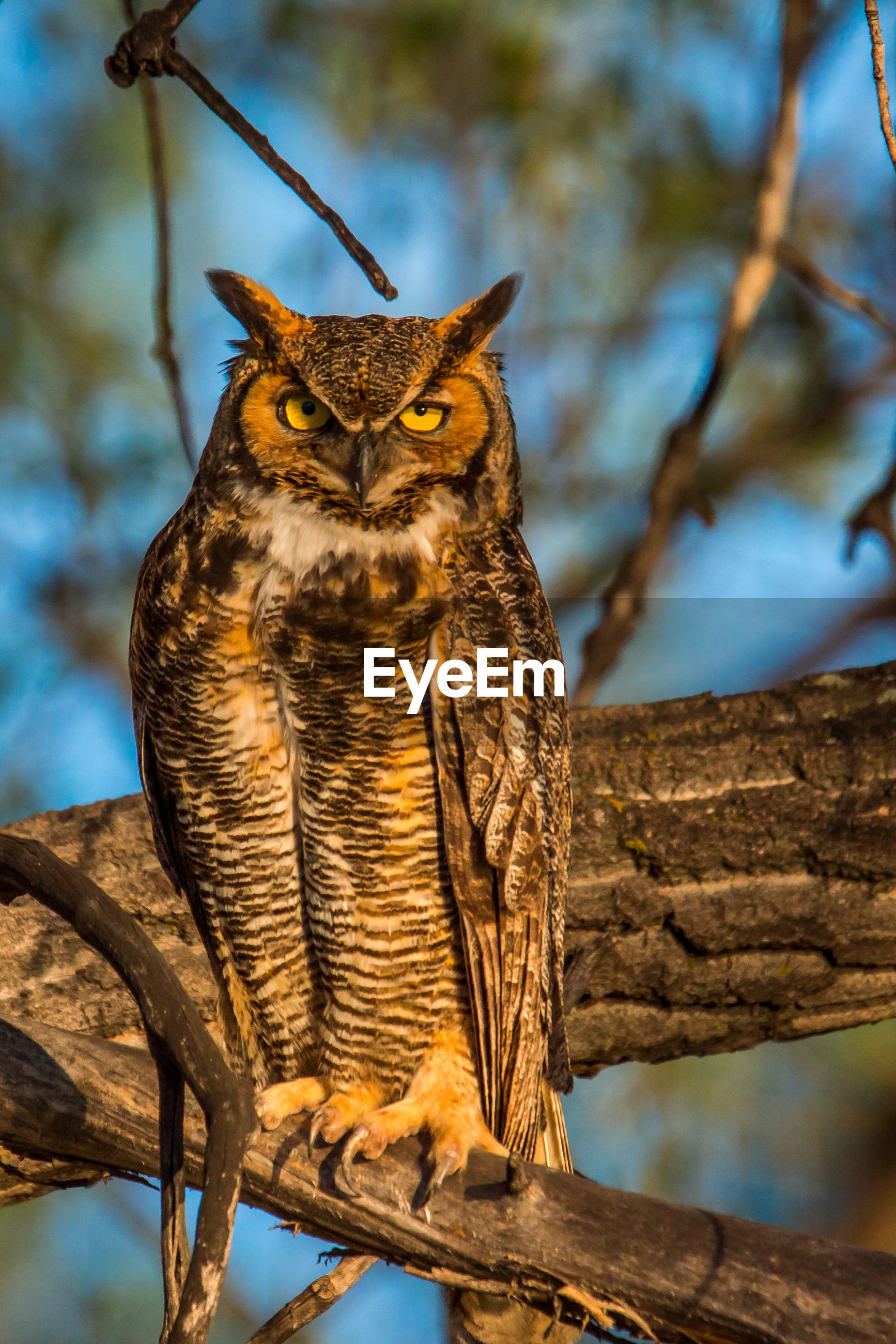 Portrait of owl perching on branch