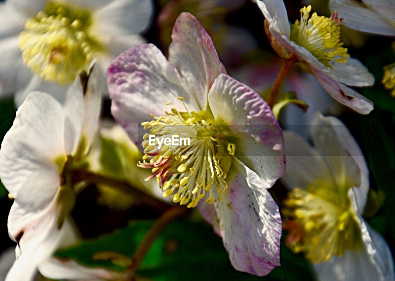 flower, petal, fragility, nature, beauty in nature, growth, flower head, no people, close-up, freshness, stamen, pollen, plant, blooming, outdoors, day