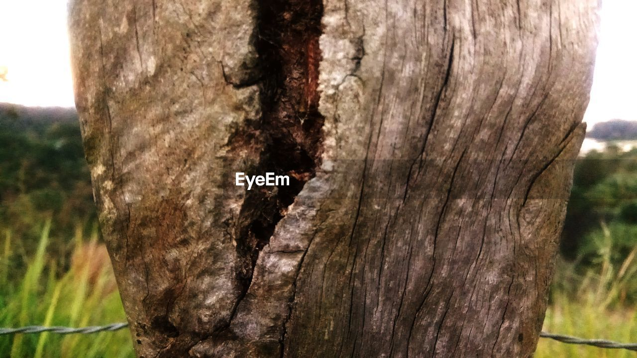 tree trunk, tree, textured, nature, close-up, day, outdoors, focus on foreground, no people, sky
