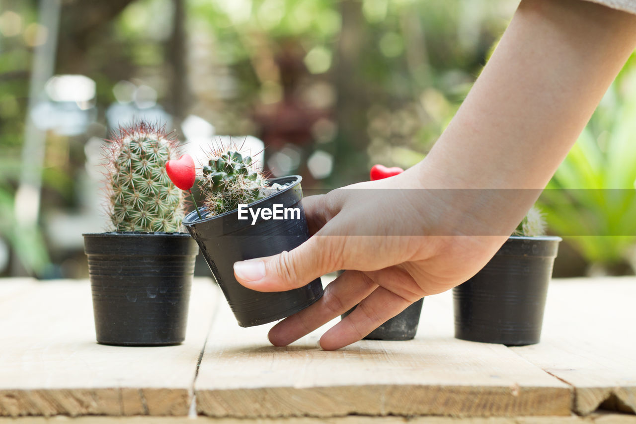 human hand, hand, human body part, potted plant, focus on foreground, plant, one person, real people, day, growth, holding, nature, close-up, beauty in nature, flower, outdoors, flowering plant, body part, flower pot, finger, gardening, planting