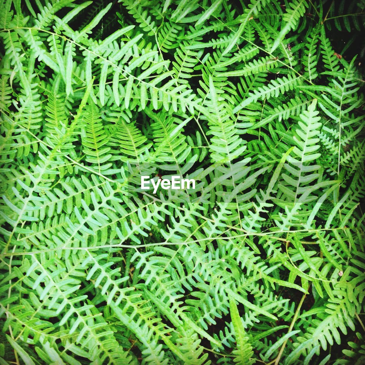 Detail shot of fern fronds as background