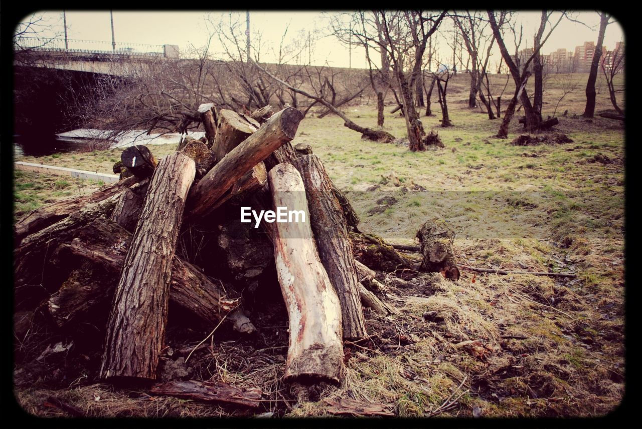 tree, no people, outdoors, day, tree trunk, deforestation, nature, log, tranquility, landscape, forest, dead tree, bare tree, grass, beauty in nature, sky, close-up