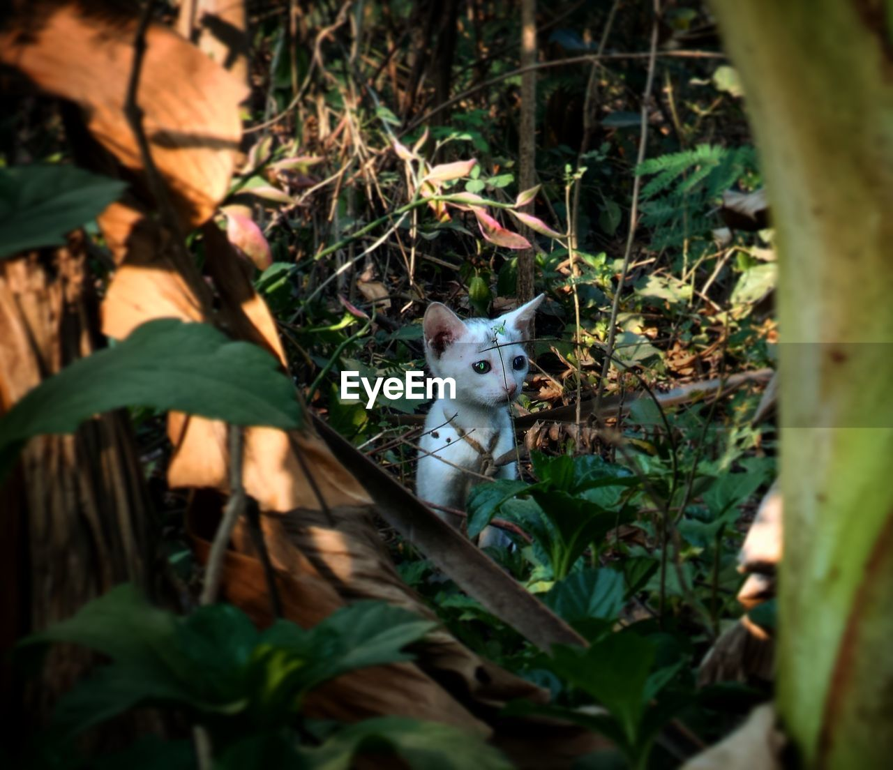 one animal, animal themes, mammal, domestic cat, leaf, feline, pets, looking at camera, portrait, domestic animals, no people, nature, day, sitting, outdoors, close-up