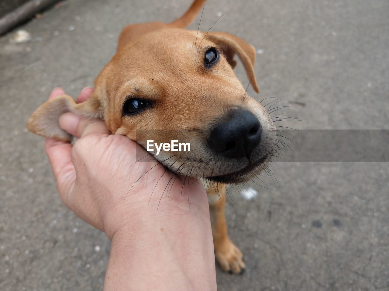 one animal, domestic, dog, canine, human hand, pets, hand, mammal, domestic animals, human body part, real people, vertebrate, one person, personal perspective, unrecognizable person, high angle view, holding, finger, pet owner, human limb