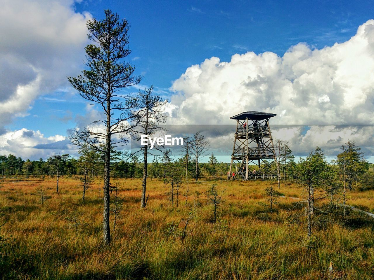 cloud - sky, tree, sky, nature, field, day, outdoors, grass, water tower - storage tank, no people, beauty in nature, growth, architecture