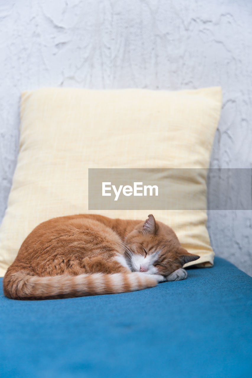 CAT SLEEPING ON A SOFA