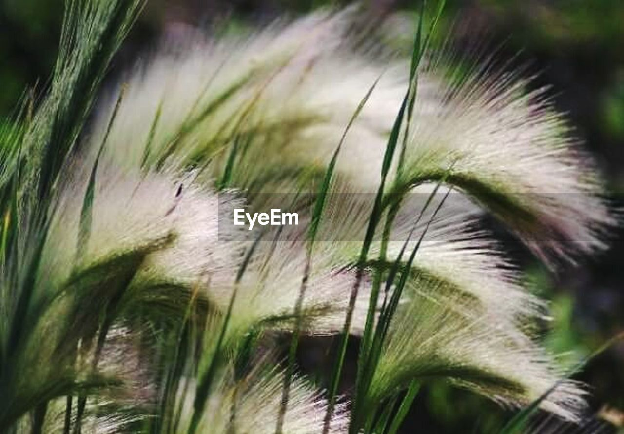 close-up, growth, nature, focus on foreground, plant, day, grass, outdoors, green color, no people, flower, beauty in nature, freshness