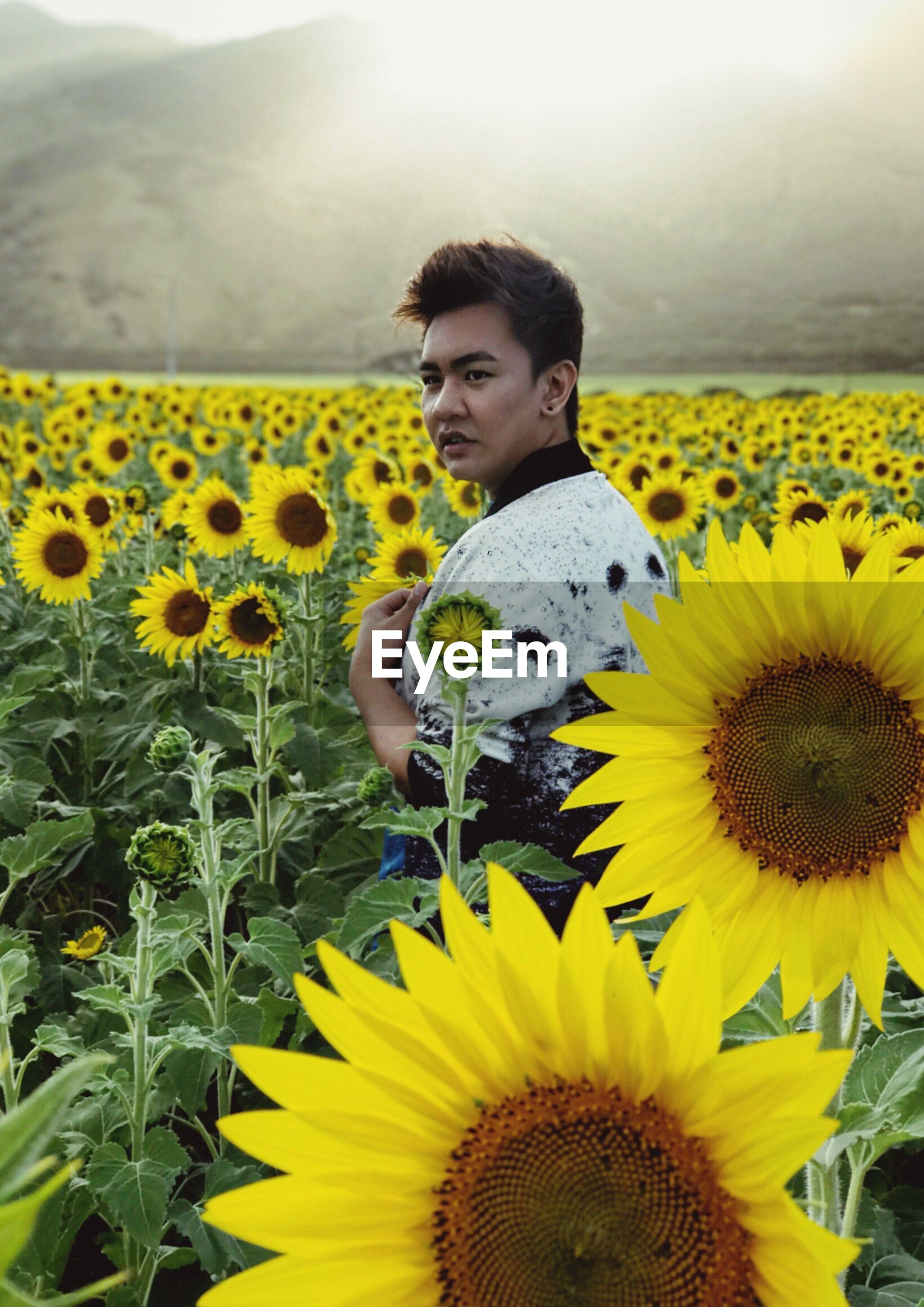 Young man looking away while standing amidst sunflower field