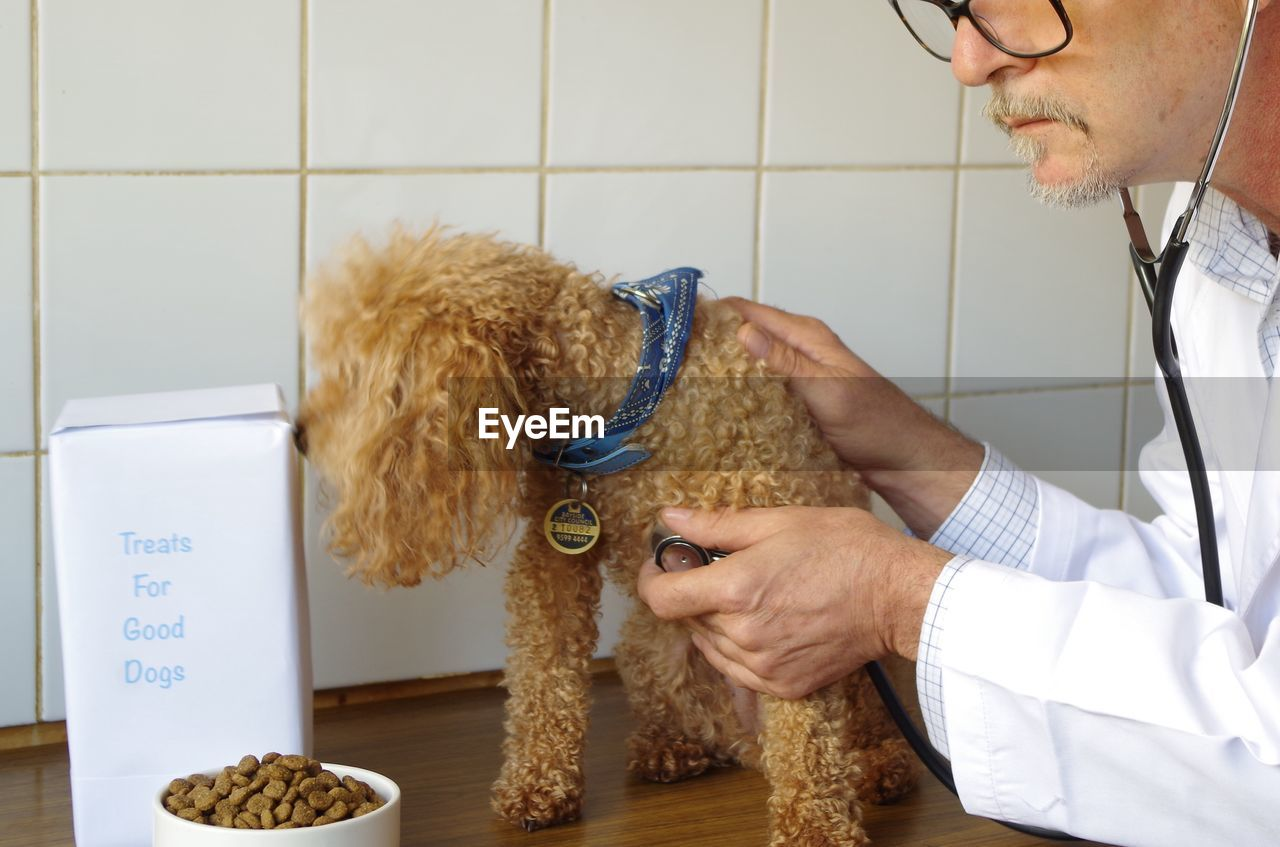 Close-Up Of Vet Examining Poodle