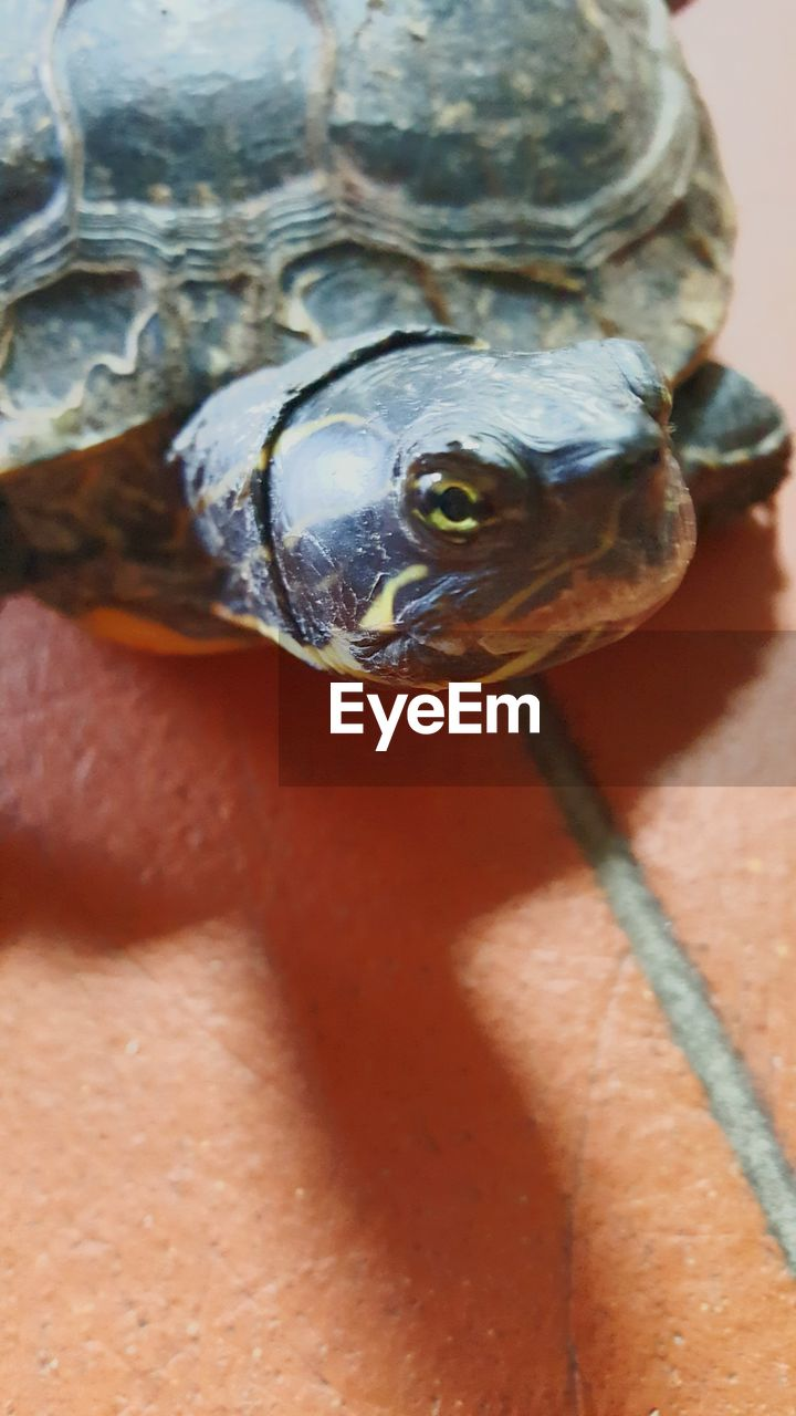 one animal, animal themes, animals in the wild, animal wildlife, no people, high angle view, reptile, close-up, day, nature, outdoors