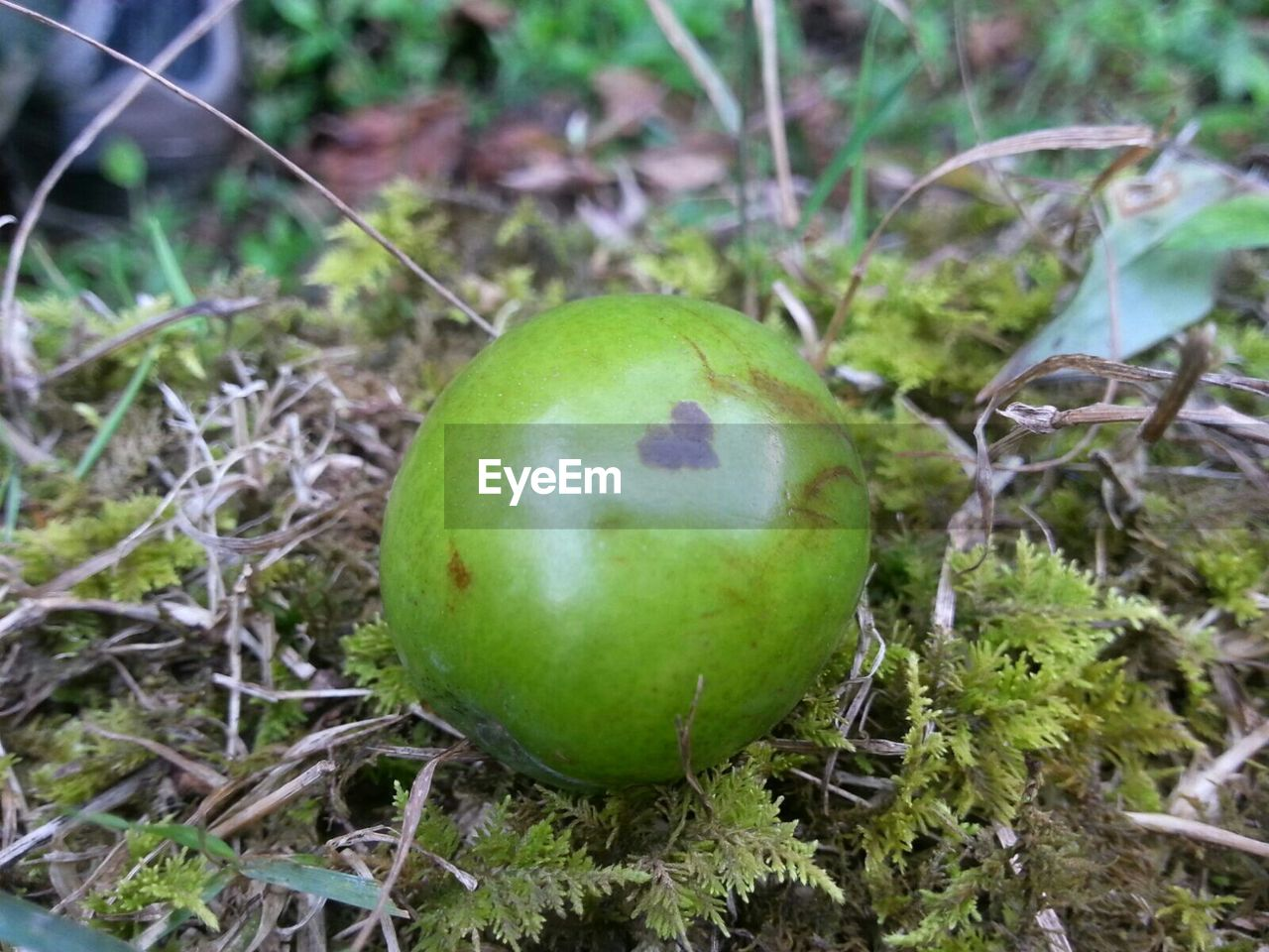 fruit, green color, food and drink, healthy eating, growth, no people, food, day, freshness, focus on foreground, close-up, field, apple - fruit, outdoors, nature, grass