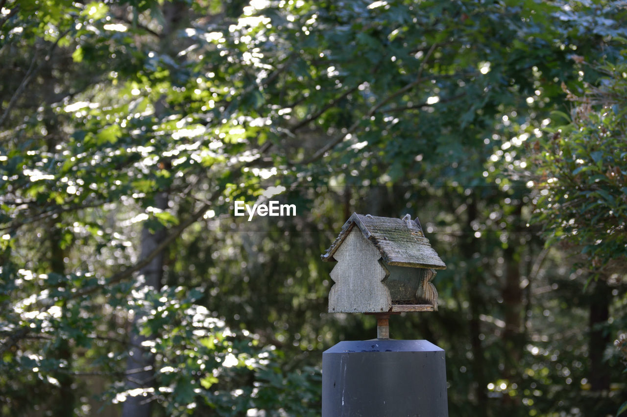 tree, plant, nature, birdhouse, no people, day, focus on foreground, growth, low angle view, outdoors, built structure, green color, wood - material, branch, beauty in nature, architecture, bird, sunlight, tranquility, cold temperature