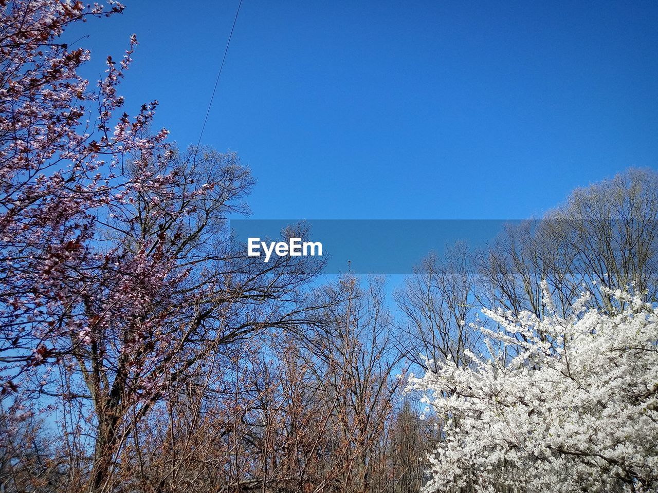sky, tree, plant, clear sky, beauty in nature, winter, tranquility, blue, nature, cold temperature, no people, day, growth, snow, scenics - nature, low angle view, tranquil scene, branch, copy space, land, outdoors