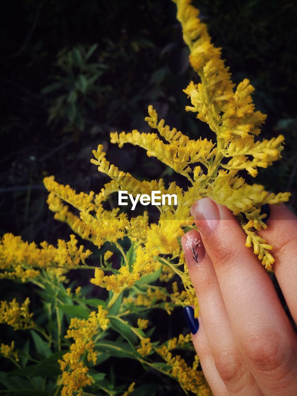 human hand, human body part, real people, flower, one person, yellow, fragility, nature, close-up, holding, outdoors, beauty in nature, lifestyles, freshness, day, flower head, people