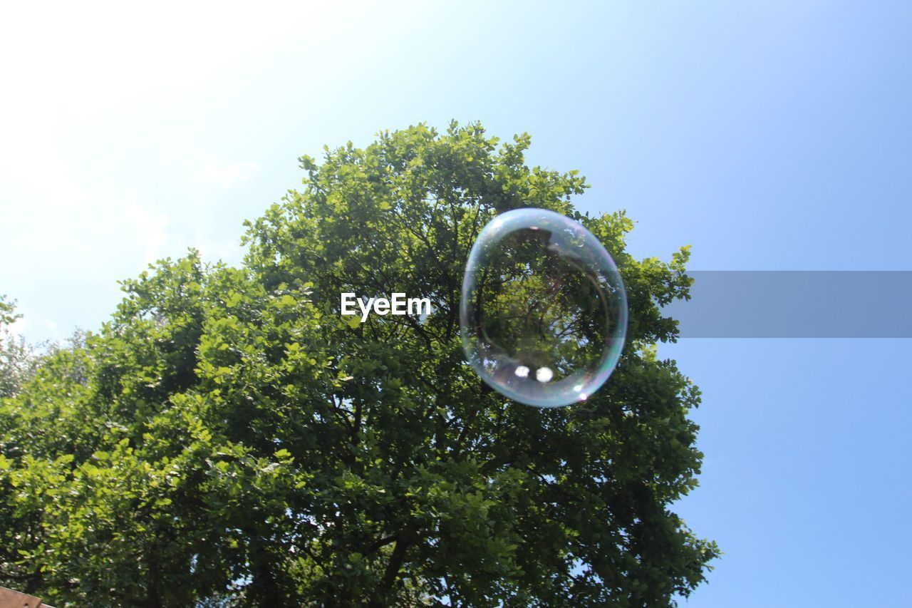 tree, plant, sky, low angle view, bubble, nature, growth, day, no people, sphere, green color, transparent, mid-air, beauty in nature, outdoors, geometric shape, shape, circle, fragility, vulnerability