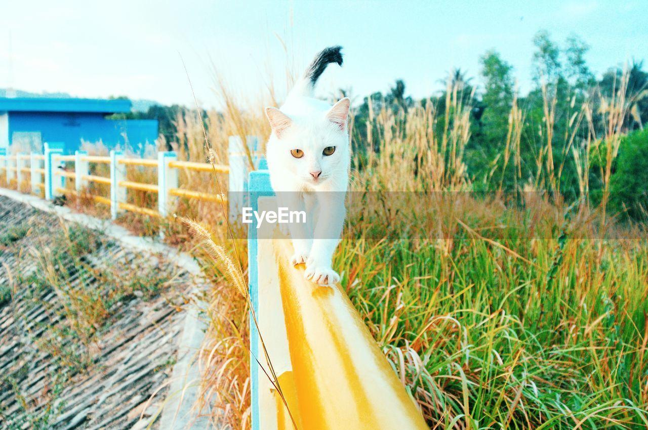 Portrait Of Cat Walking On Railing