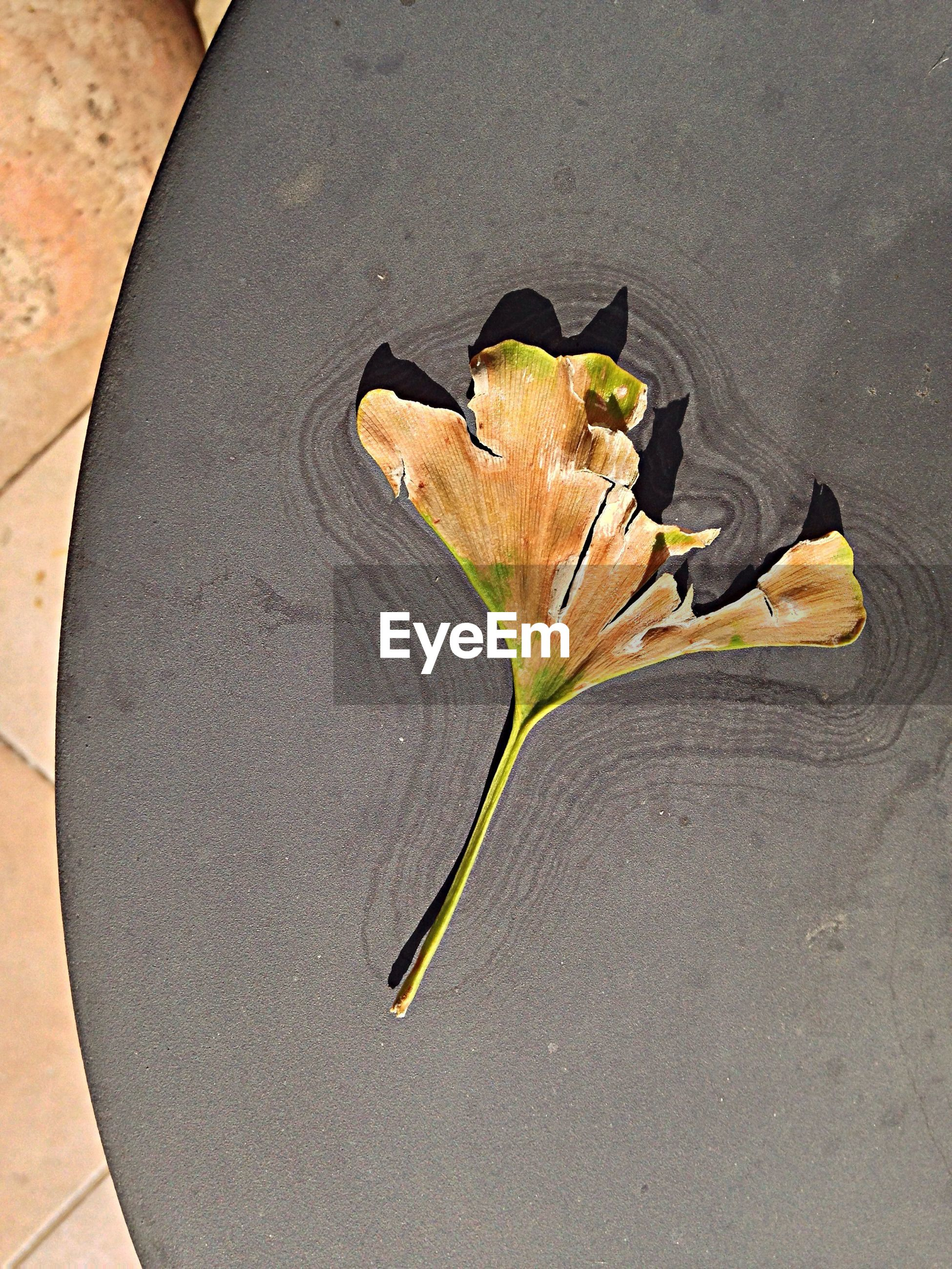 Directly below of petal on surface