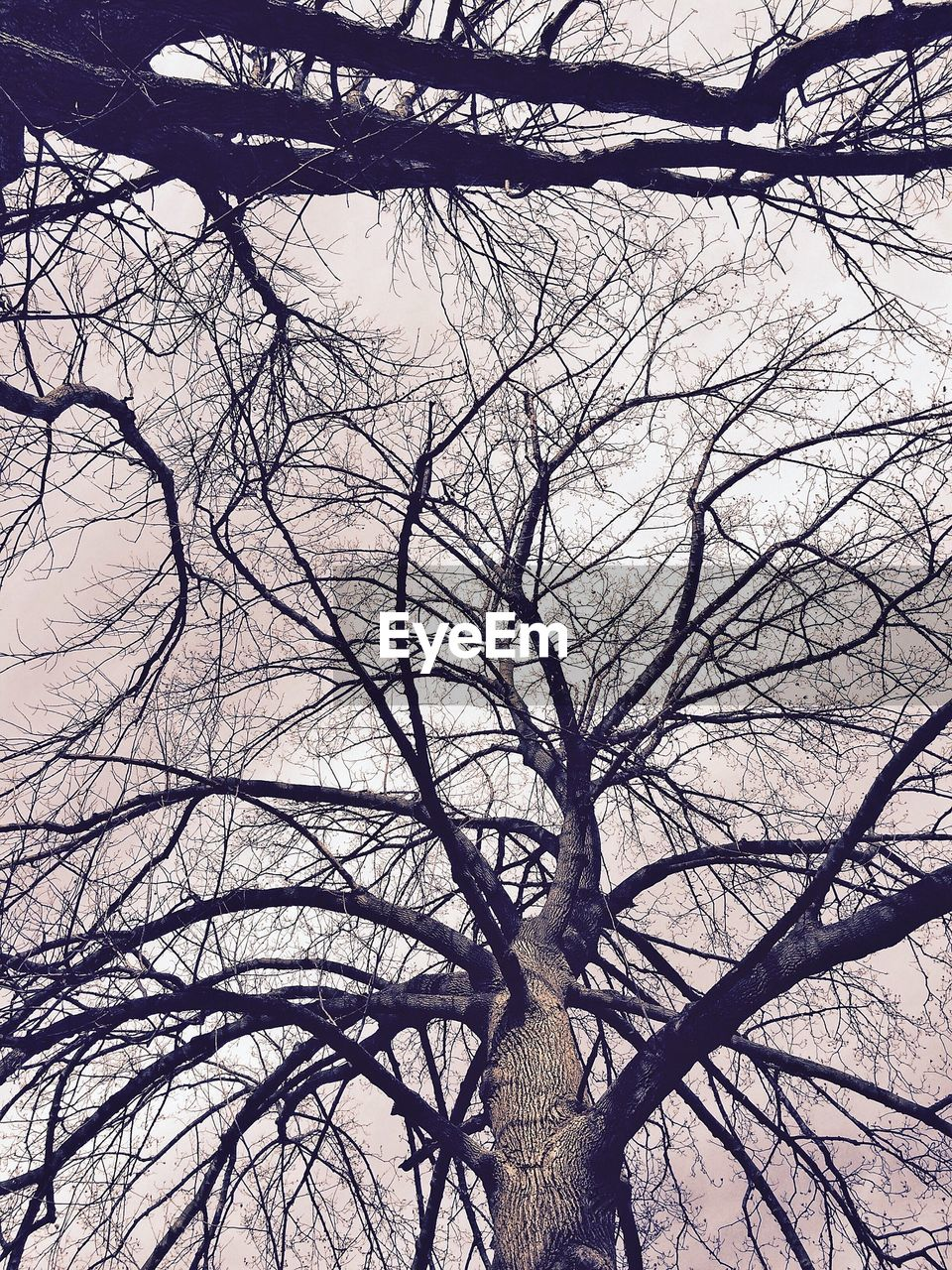bare tree, branch, tree, low angle view, nature, dead plant, no people, tree trunk, dried plant, outdoors, day, winter, beauty in nature, sky, dead tree