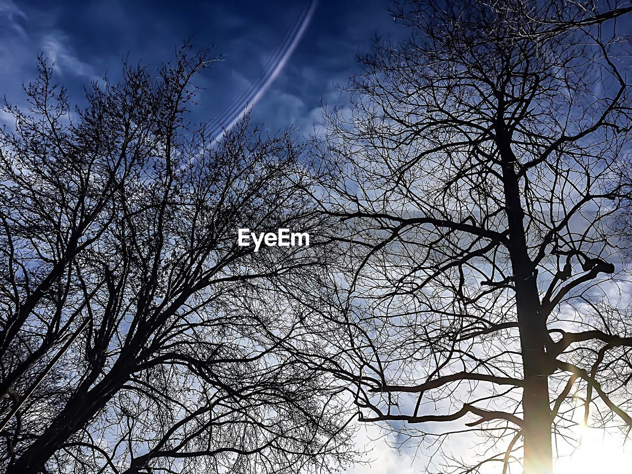 bare tree, tree, branch, low angle view, sky, nature, no people, outdoors, beauty in nature, day, winter