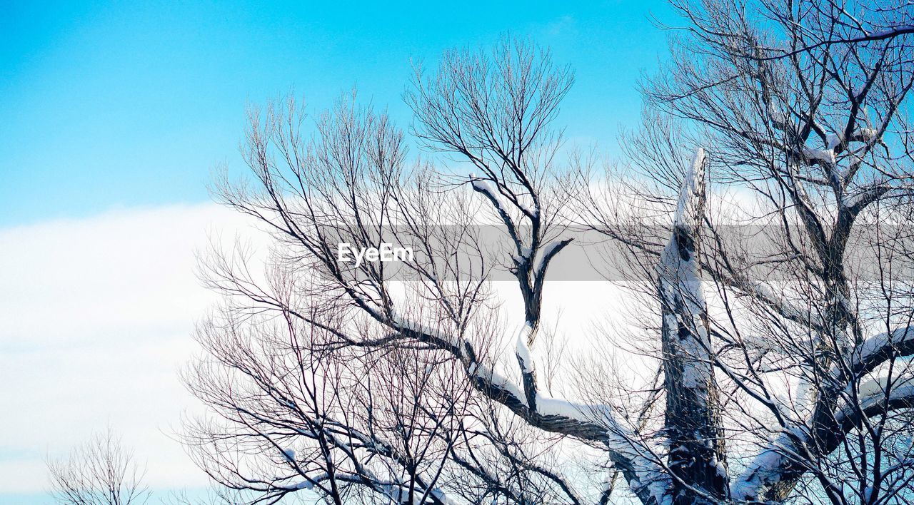 bare tree, nature, branch, tree, beauty in nature, tranquil scene, tranquility, low angle view, scenics, outdoors, sky, day, no people, winter, blue, dried plant, landscape, clear sky, dead tree