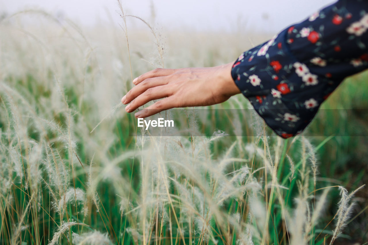 plant, field, land, one person, human hand, growth, real people, selective focus, hand, farm, nature, agriculture, rural scene, day, human body part, crop, lifestyles, leisure activity, cereal plant, outdoors, farmer