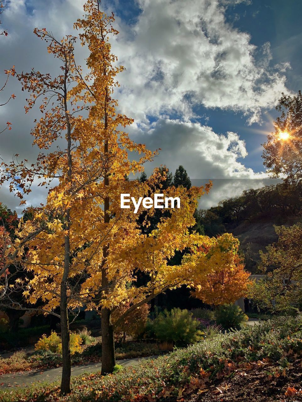 tree, sky, plant, autumn, change, cloud - sky, beauty in nature, nature, growth, tranquility, tranquil scene, no people, sunlight, orange color, scenics - nature, outdoors, day, land, leaf, non-urban scene, fall, natural condition