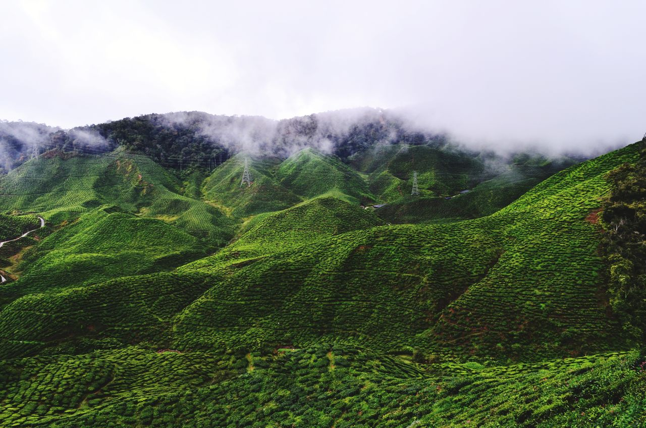 scenics - nature, tranquil scene, beauty in nature, tranquility, environment, green color, mountain, landscape, no people, fog, land, nature, sky, plant, non-urban scene, growth, day, idyllic, outdoors, tea crop, plantation