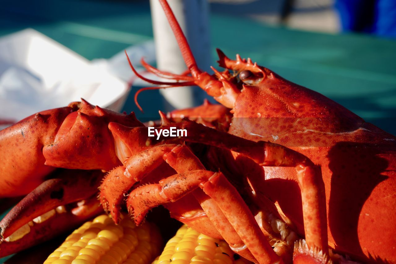 food and drink, food, close-up, crustacean, seafood, freshness, wellbeing, focus on foreground, no people, healthy eating, still life, crab, day, ready-to-eat, lobster, selective focus, indoors, red, meat, crab - seafood, snack