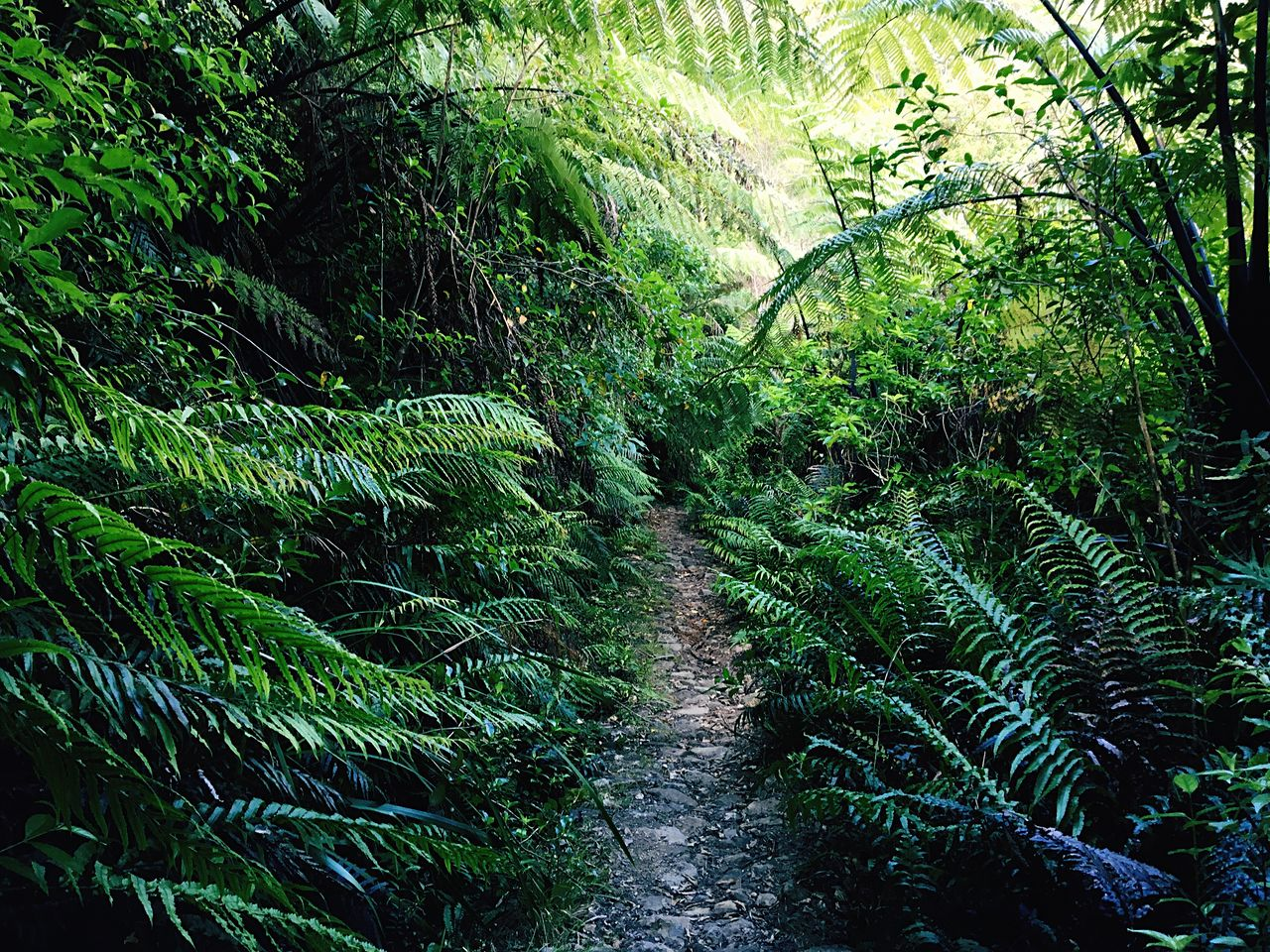 nature, beauty in nature, green color, growth, lush foliage, outdoors, tree, scenics, no people, tranquility, tranquil scene, day, lush - description, plant, forest, water, fern, landscape