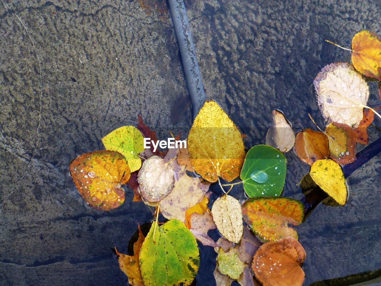 leaf, autumn, change, dry, high angle view, outdoors, day, no people, nature, close-up, yellow, fragility, beauty in nature, freshness, water