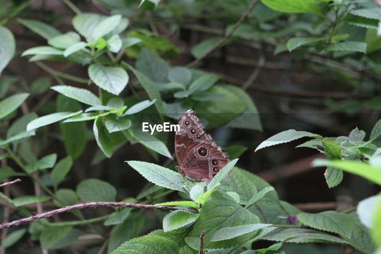 leaf, plant part, plant, animal themes, one animal, growth, animals in the wild, animal, beauty in nature, animal wildlife, insect, invertebrate, green color, nature, close-up, focus on foreground, butterfly - insect, day, animal wing, no people, outdoors, butterfly