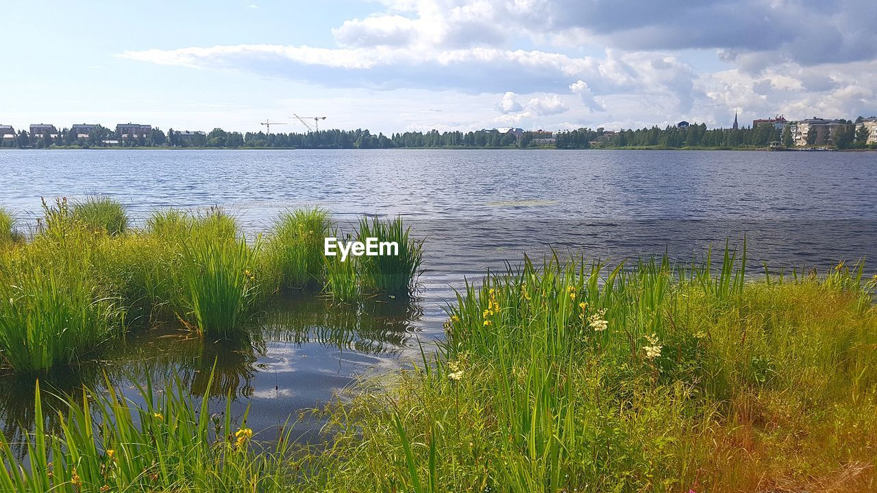 water, sky, plant, cloud - sky, tranquility, beauty in nature, grass, lake, tranquil scene, scenics - nature, growth, nature, no people, day, tree, outdoors, green color, idyllic