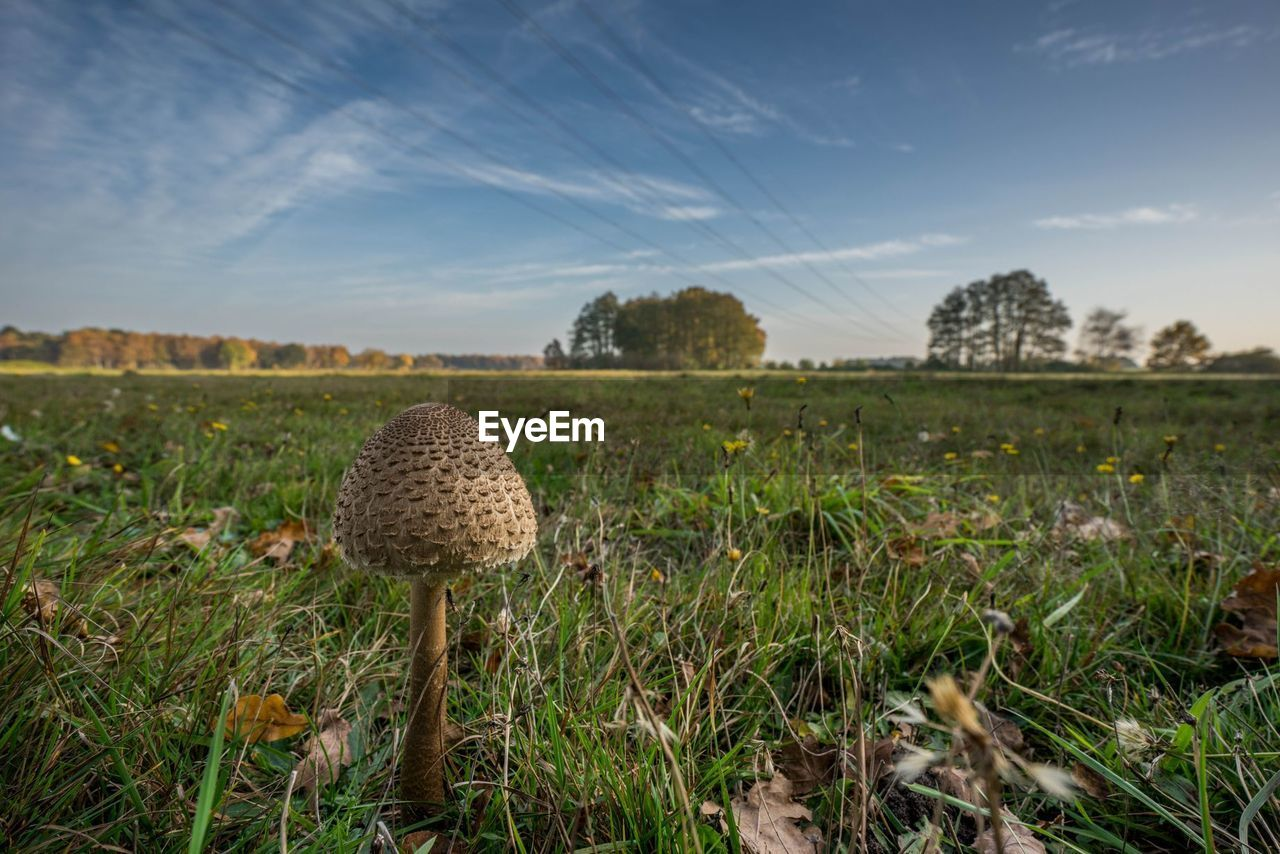 Close-up of mushroom growing on field against sky