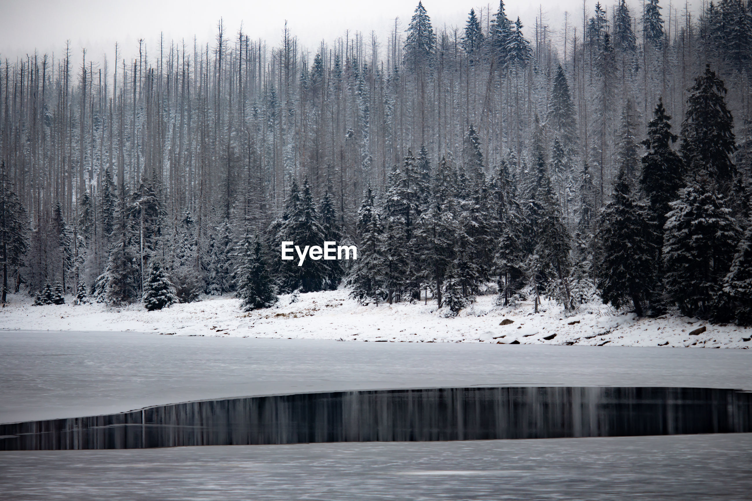 Scenic view of frozen lake in forest during winter