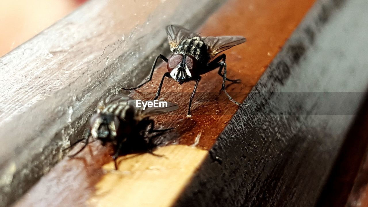 Close-Up Of Insects On Wood
