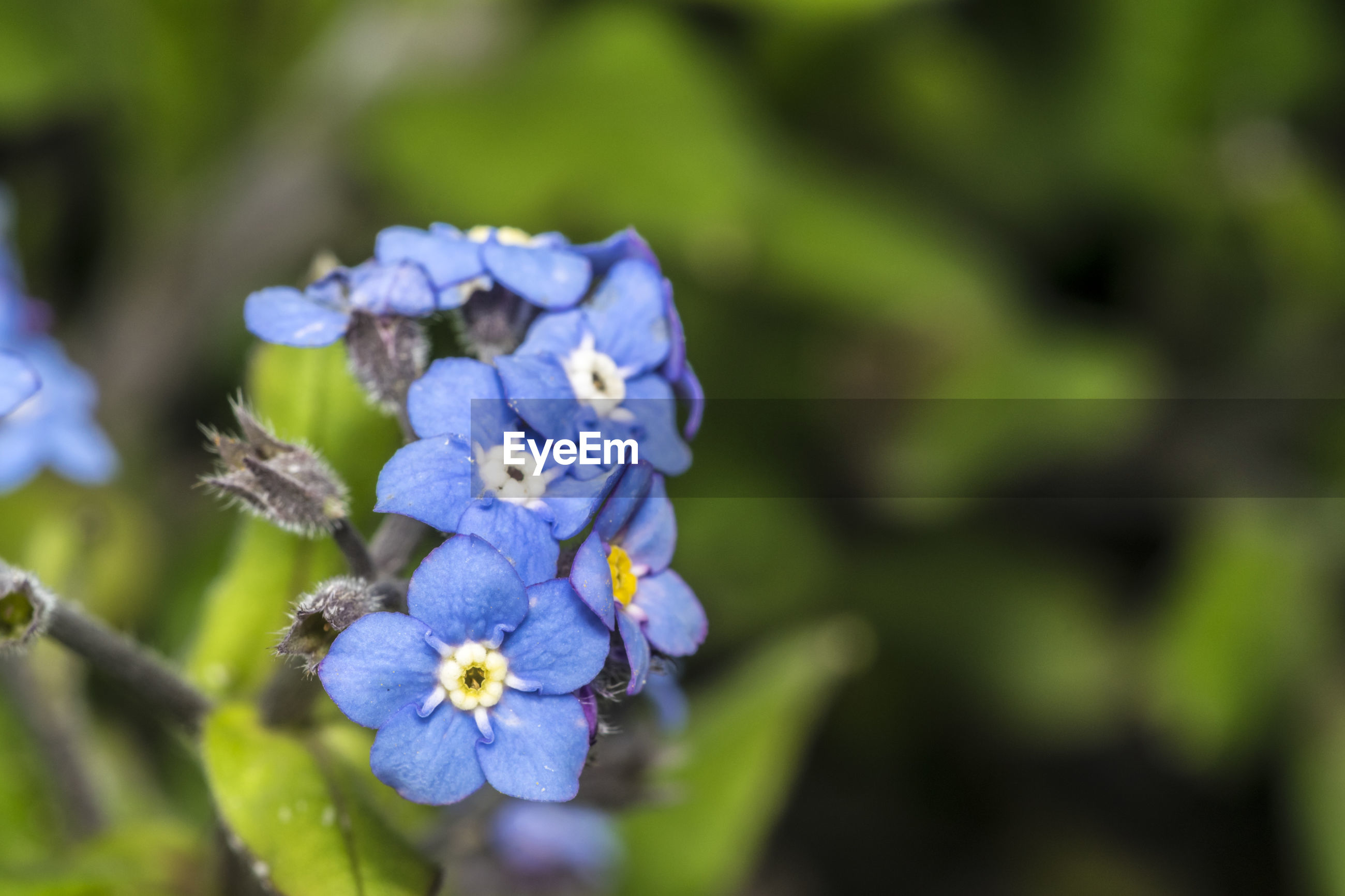 flower, fragility, beauty in nature, nature, petal, freshness, growth, flower head, day, outdoors, no people, plant, purple, close-up, springtime, blue, blooming, animal themes