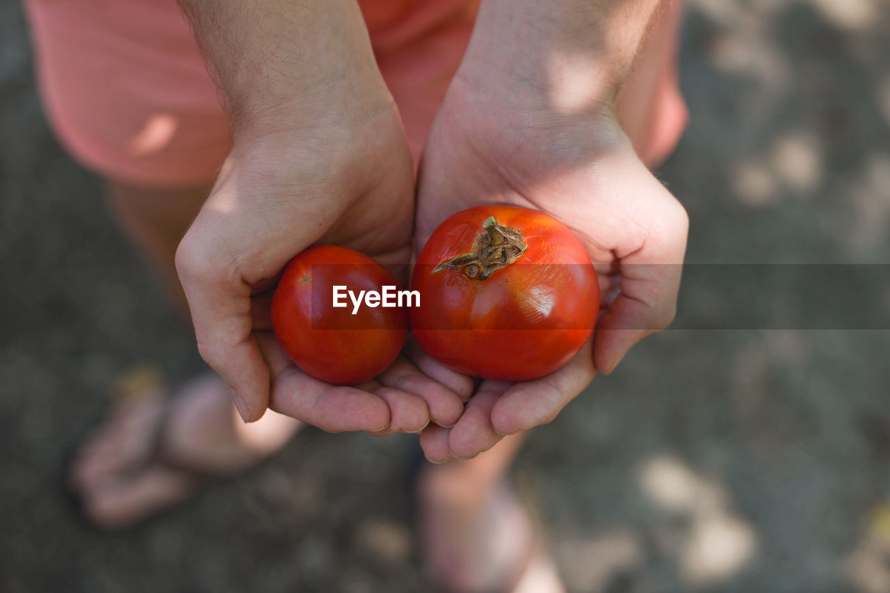Close-Up Of Man Holding Tomatoes