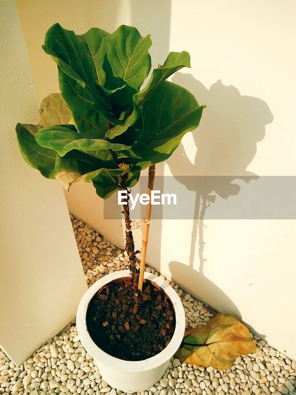 growth, leaf, potted plant, plant, table, indoors, fragility, freshness, nature, no people, green color, close-up, flower, day