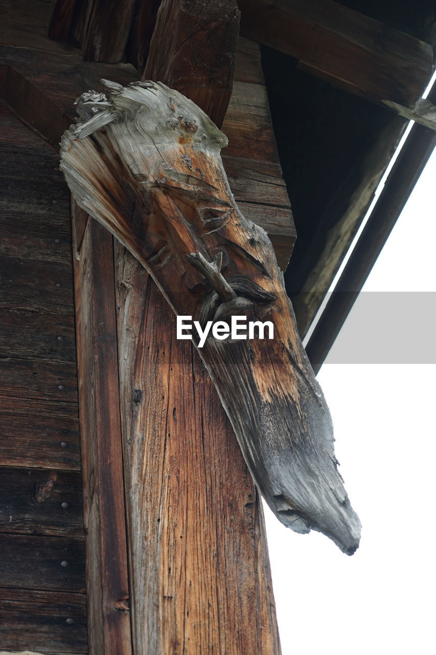 wood - material, bird, one animal, no people, animal themes, perching, low angle view, close-up, animals in the wild, animal wildlife, outdoors, day, nature