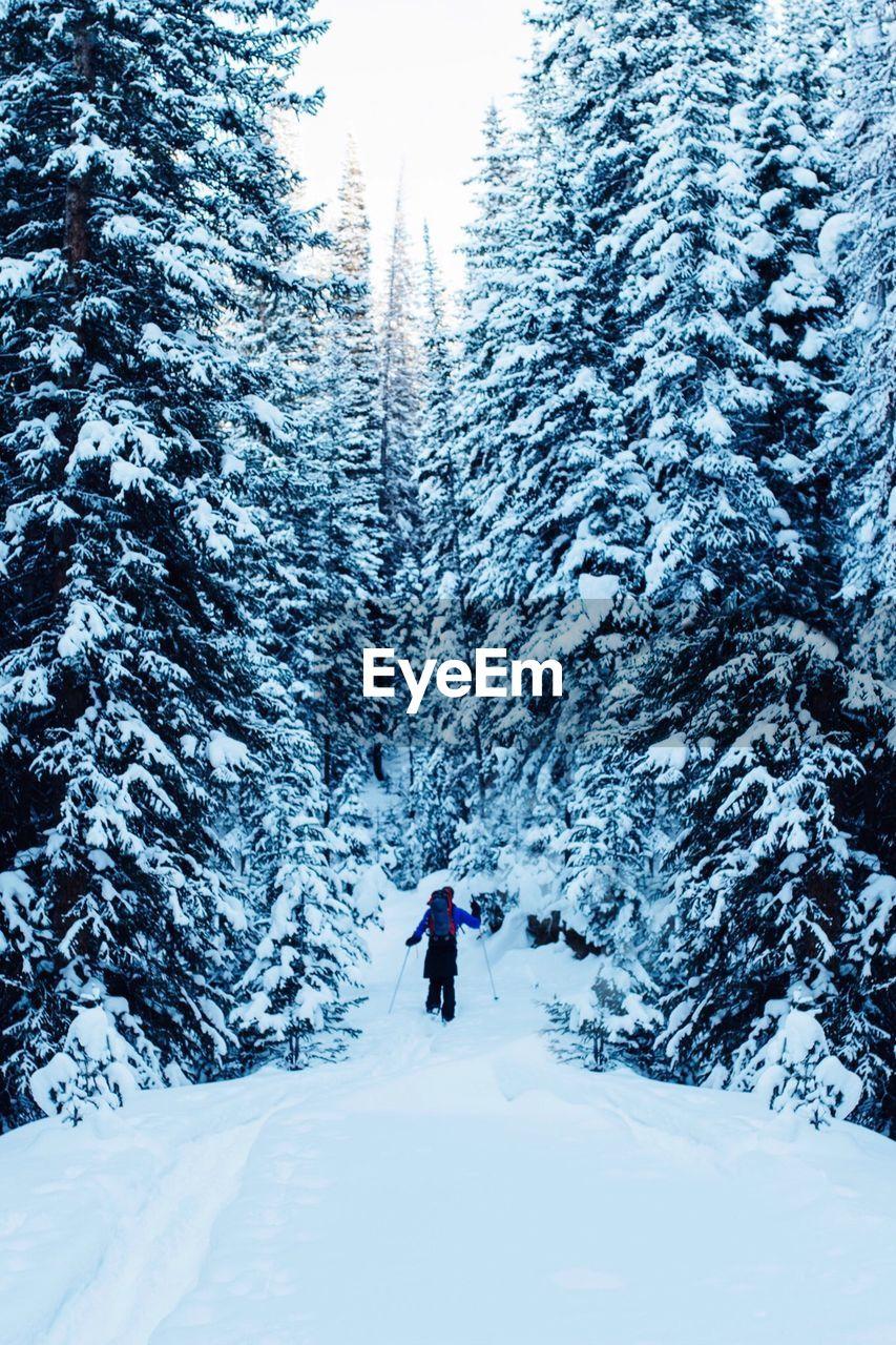 Man On Snow Covered Landscape
