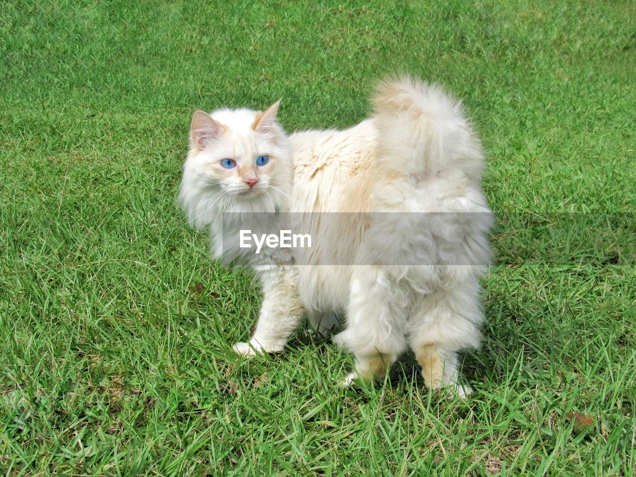 grass, domestic, pets, mammal, domestic animals, animal themes, one animal, animal, plant, cat, vertebrate, field, feline, green color, domestic cat, land, portrait, looking at camera, nature, day, no people, whisker