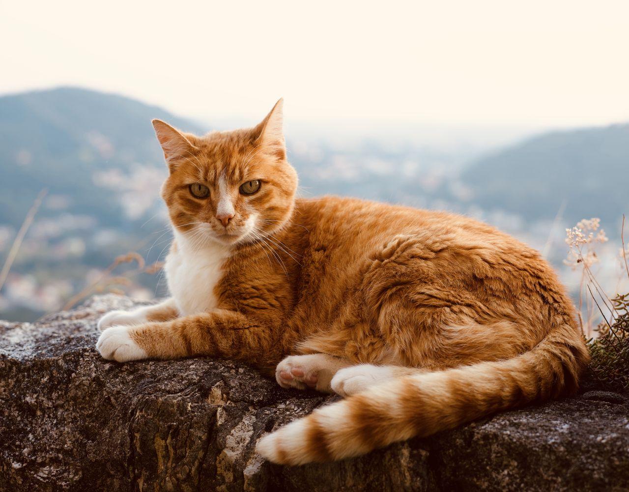 Cat lying on rock