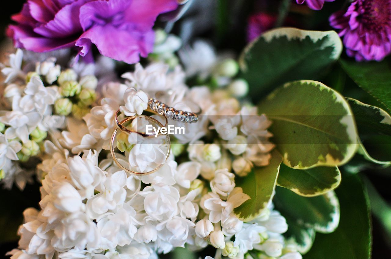 flower, flowering plant, plant, vulnerability, freshness, fragility, beauty in nature, petal, growth, close-up, nature, flower head, inflorescence, white color, no people, day, leaf, focus on foreground, plant part, botany, pollen, purple