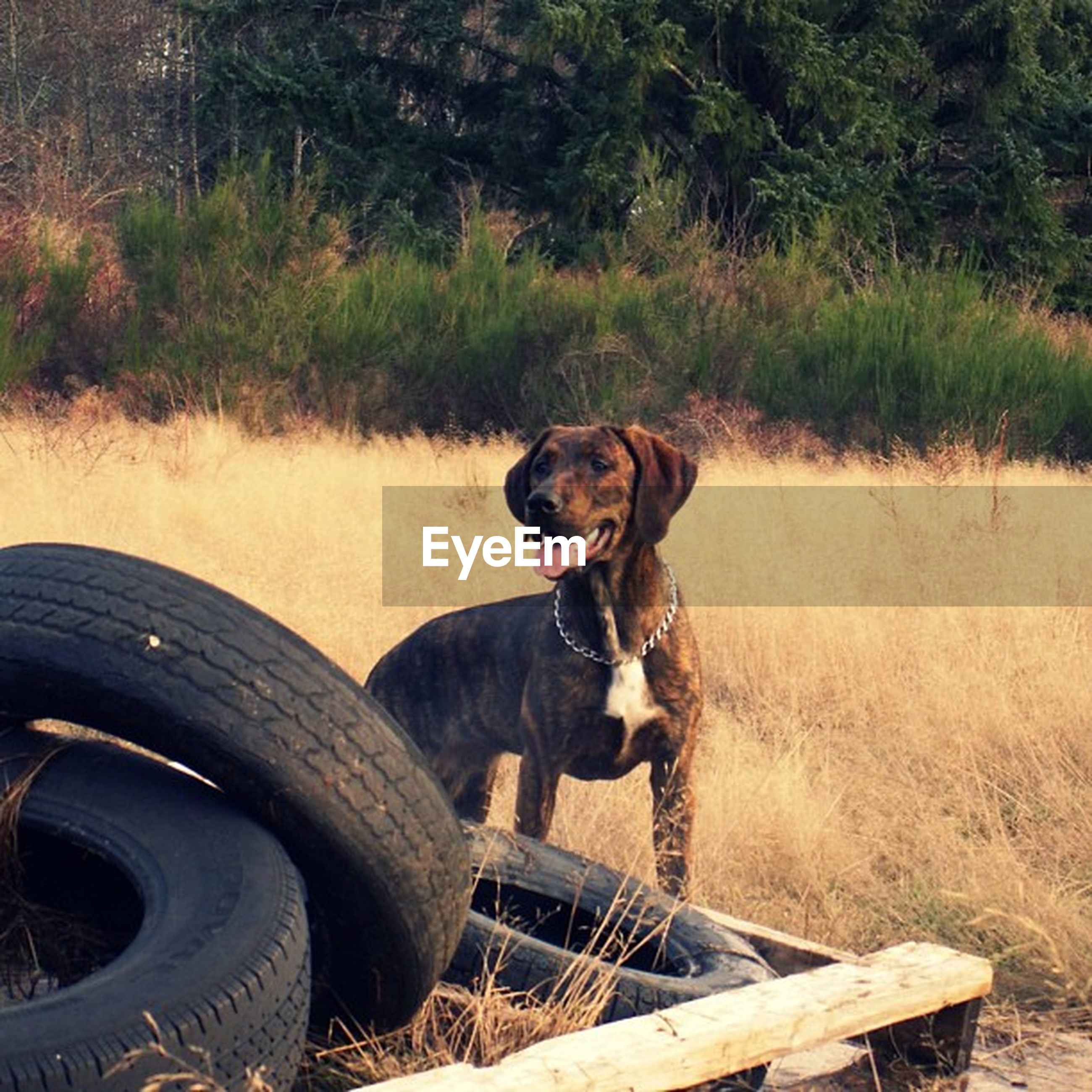 animal themes, mammal, domestic animals, one animal, pets, dog, sitting, relaxation, grass, high angle view, field, outdoors, looking at camera, day, portrait, no people, standing, full length, resting, lying down