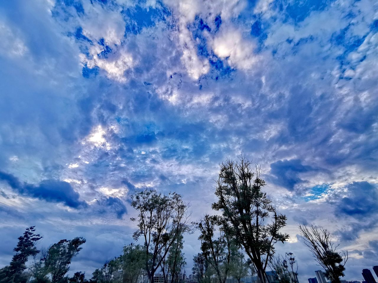 cloud - sky, sky, tree, low angle view, plant, beauty in nature, tranquility, no people, growth, scenics - nature, tranquil scene, nature, day, blue, outdoors, idyllic, non-urban scene, branch, silhouette