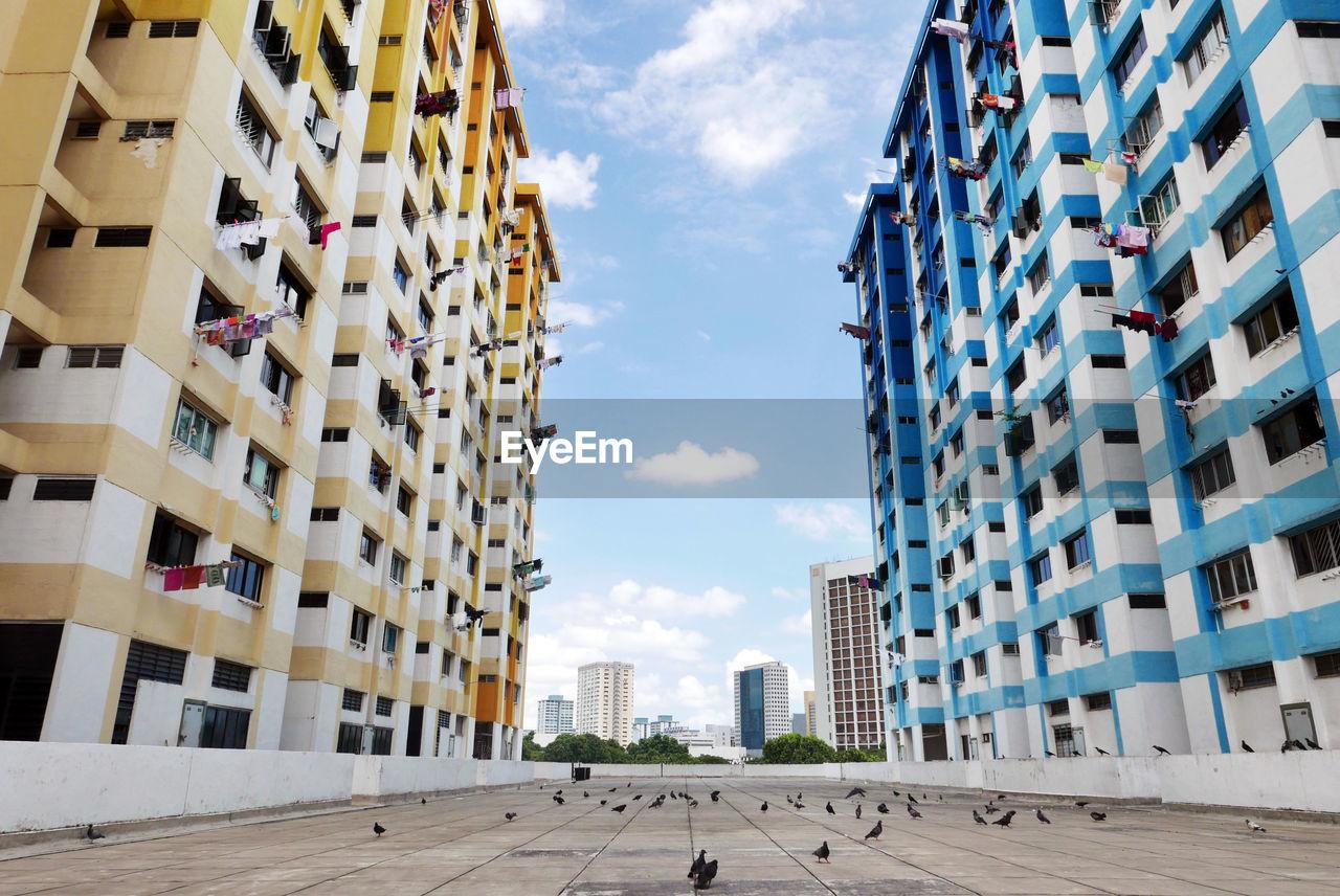 Birds On Walkway Amidst Buildings In City