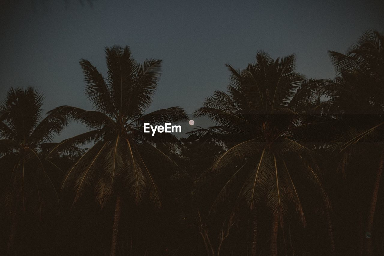 palm tree, tree, night, no people, nature, beauty in nature, growth, scenics, sky, outdoors