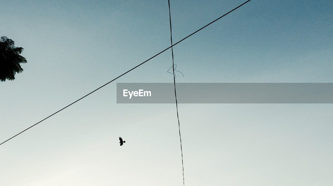 Low Angle View Of Cross Shape Power Lines Against Bird Flying In Clear Sky