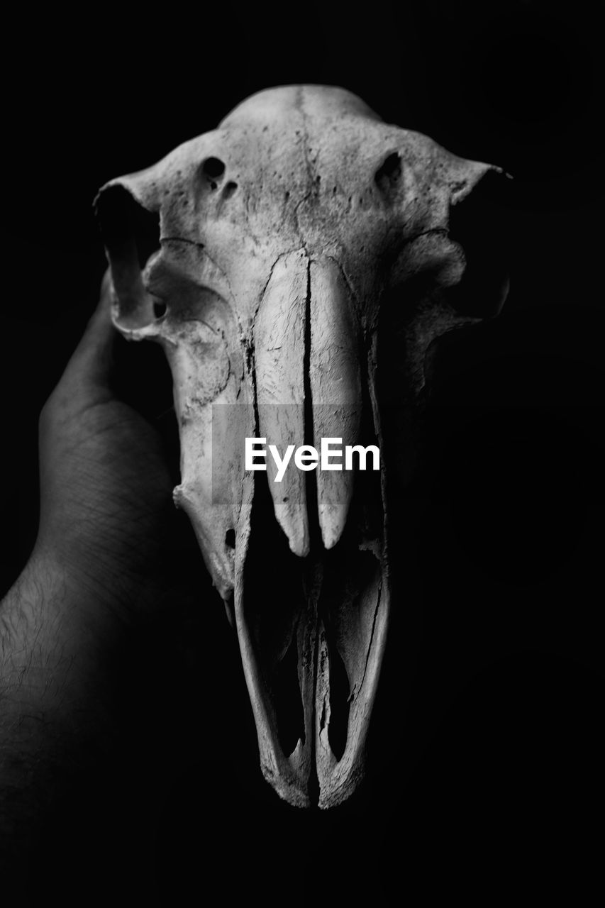 Cropped Image Of Hand Holding Animal Skull Against Black Background