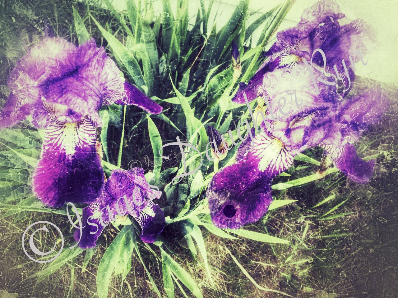 purple, flower, growth, plant, nature, no people, beauty in nature, fragility, close-up, outdoors, day